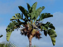 Створено унікальний текстиль з листя ананаса та бананової пальми